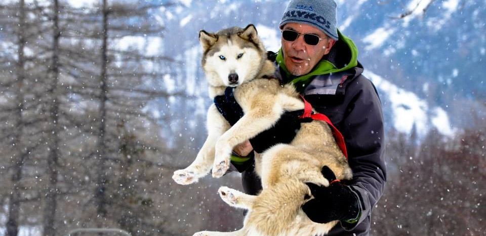 hiking sled dogs casterino